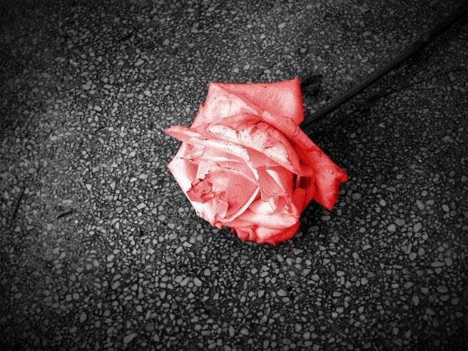 flower-1534327_1280