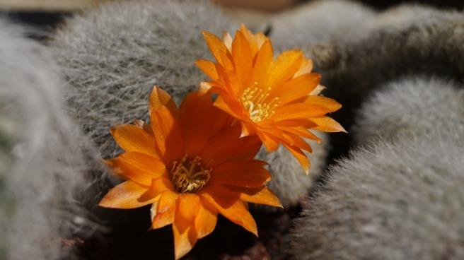 cactus-1546068_1280