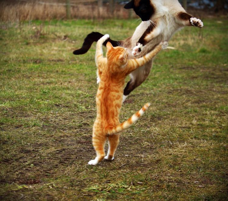 cat-1234995_1280