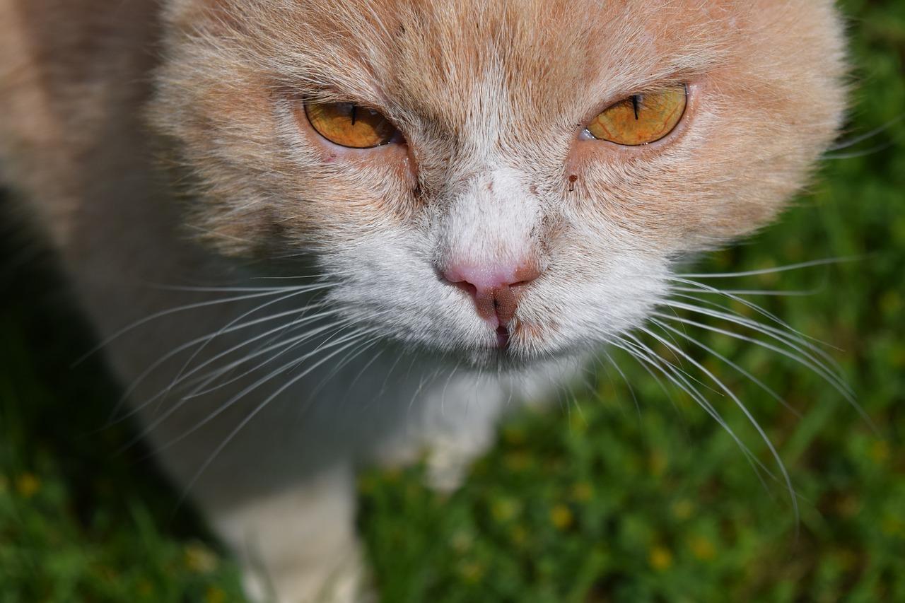 cat-1418395_1280