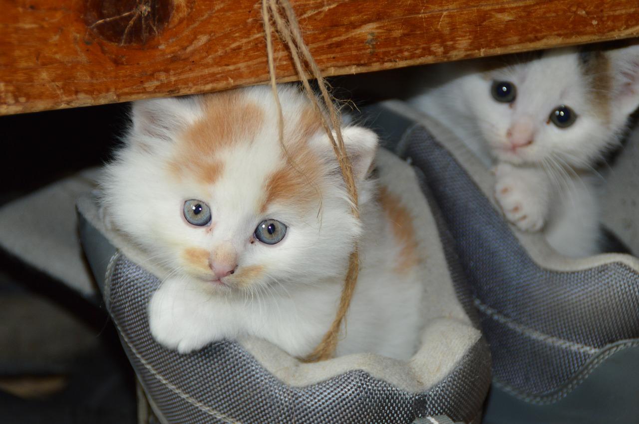 cat-451377_1280