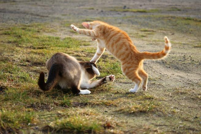 cat-1184781_1280