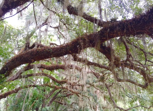 tree-1623461_1280