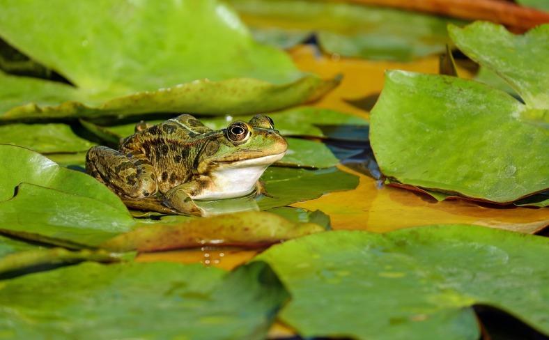 frog-2211972_1280